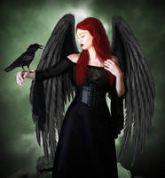 Crow by Noir1001