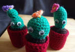 Crochet cactus by Craftcove