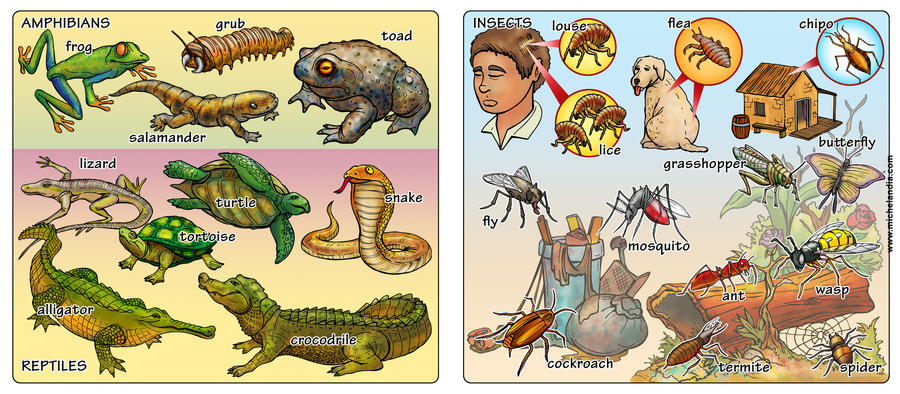 AMPHIBIANS, REPTILES AND INSECTS by MICHELANDIA on deviantART