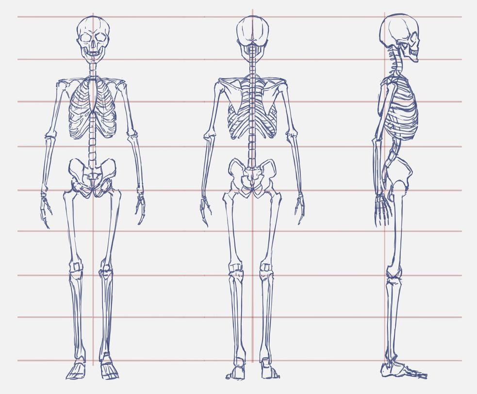01 Anatomy /a man by Lenalee-sama