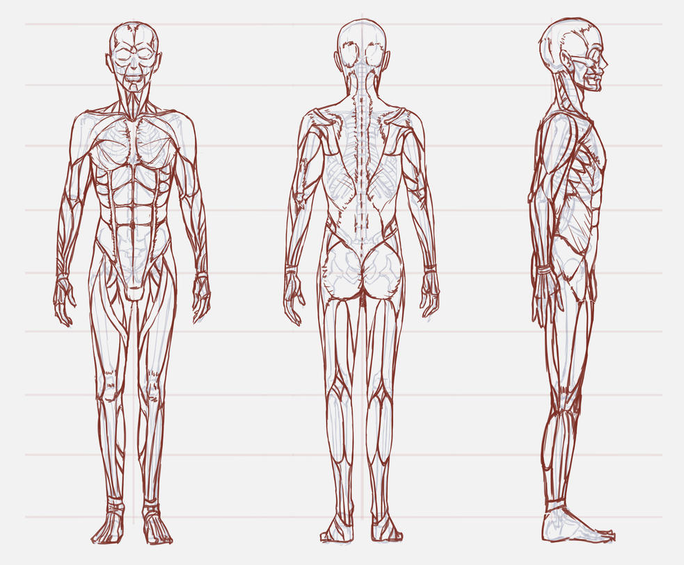 02 Anatomy /a man by Lenalee-sama