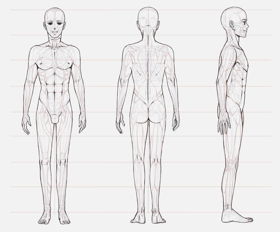 03 Anatomy /a man by Lenalee-sama