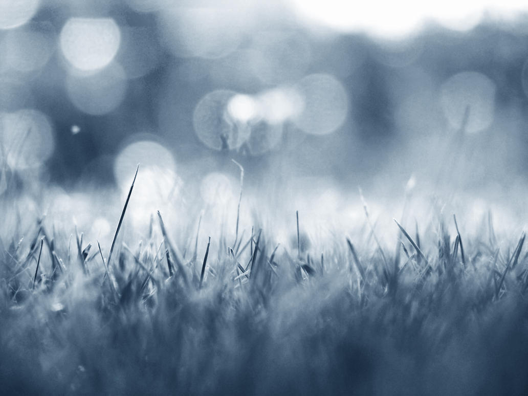 Grass by beanphotogi