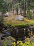 Alpine Creek Stock