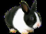 Rabbit 001 PNG