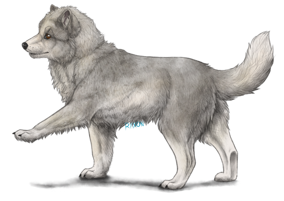 how to draw an arctic fox easy