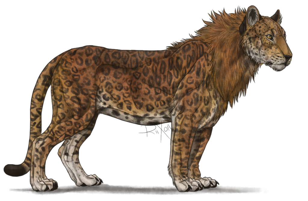 Leopon by Riixon on DeviantArt