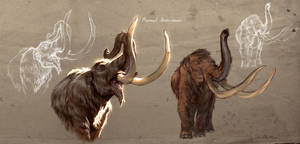 Mammut americanum study