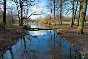 Morning in Vondelpark by scoiattolissimo