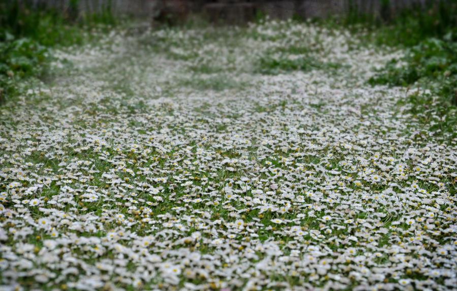 Field of little white flowers by georgina gibson on deviantart field of little white flowers by georgina gibson mightylinksfo