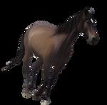 Horse Precut