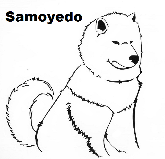 samoyedo's Profile Picture