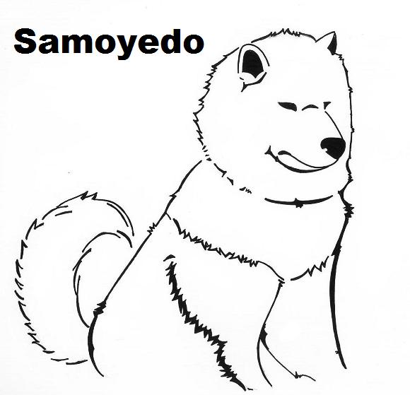 samoyedo's Profile Picture