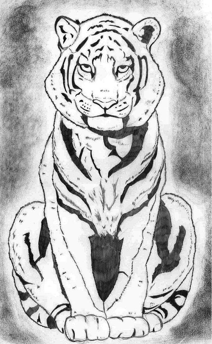 Tigre Sentado - Sitting Tiger by samoyedo