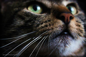 my cat 'fish' by Anavis