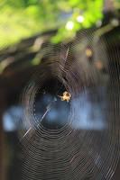 spiderweb by Anavis