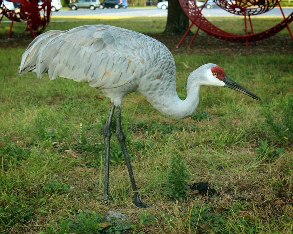 Crane And Outdoor Sculptures By Lachlantemplar On Deviantart