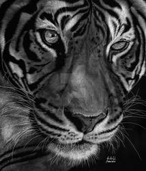 Sumatran Tiger by SAU21866