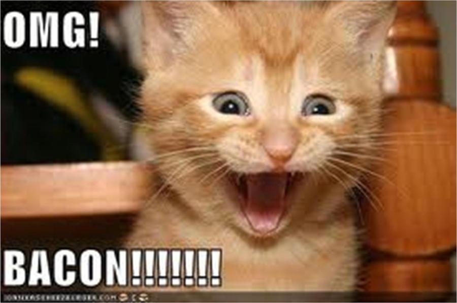 Funny Cat Emmadragon