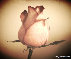 sepia-rose's Profile Picture