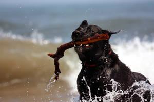 Dog 3 by scott0002