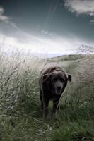 Bear by scott0002