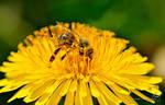 Bee's Fast Food