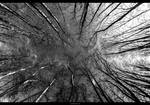 Eye of trees