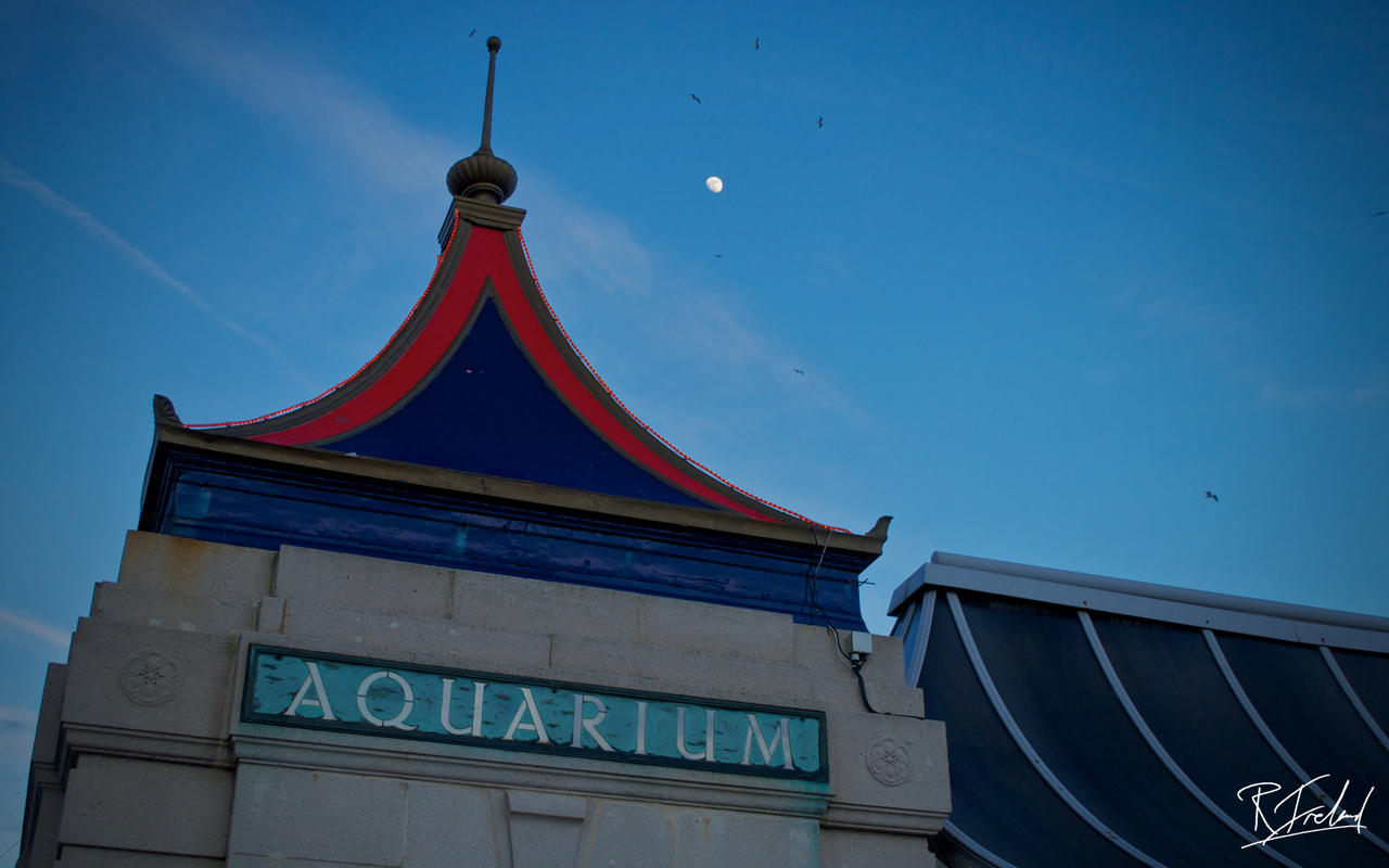 Brighton_Aquarium_by_richardsim7.jpg