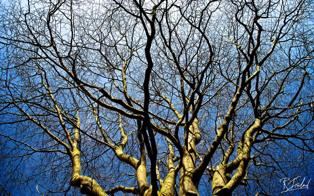 Dramatic_Tree_by_richardsim7.jpg