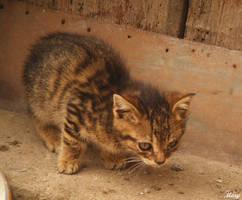 sweet kitten by EsmeraldEyes