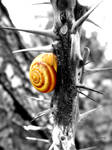 .:snail:. by EsmeraldEyes