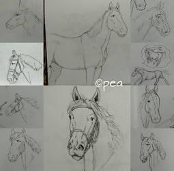 Horses makes me crazy