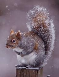 Squirrel by CodyClark