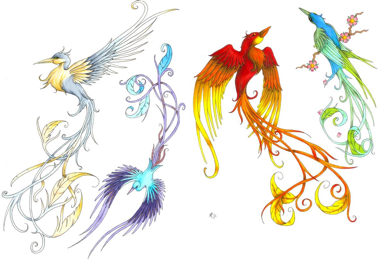 Bird of paradise animal drawing - photo#2
