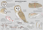 Barn Owl References Notes