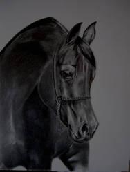 Horse by freddeb