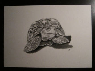 Turtle by freddeb