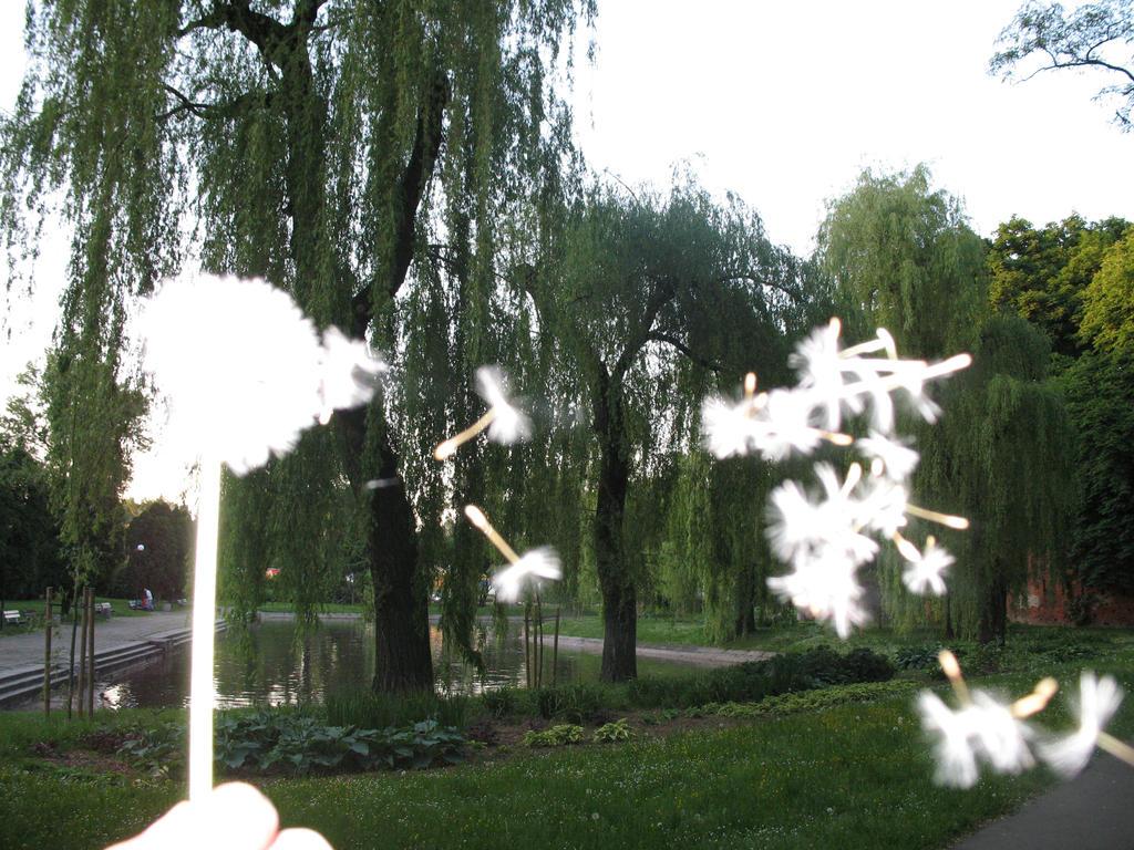 dandelion by sfatka