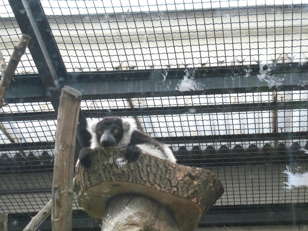 lemur by sfatka