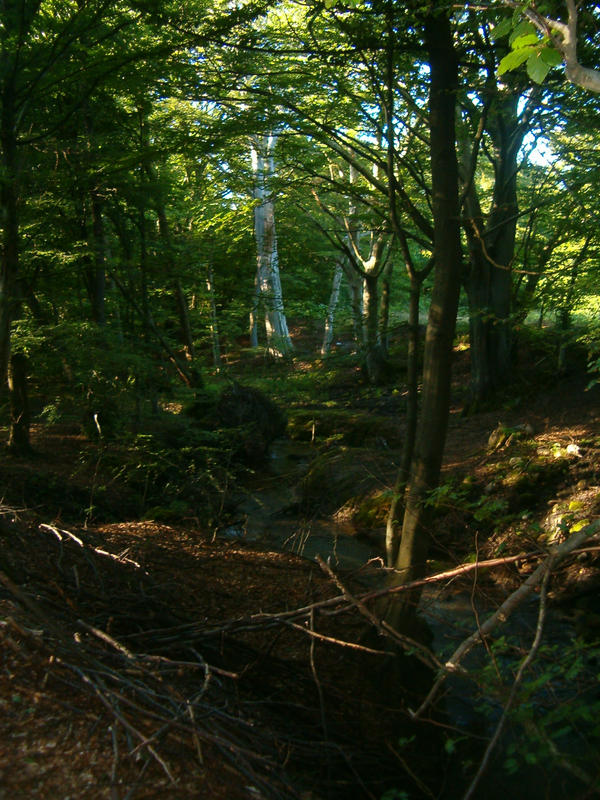 el bosque by sfatka