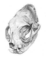 Skull practice