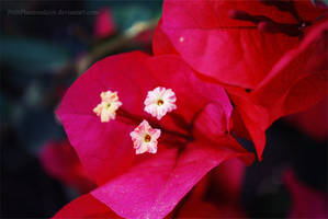 Flowers Inside a Flower by PetitPhantomhive