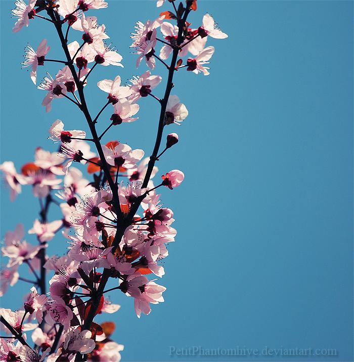 Flor Caeli by PetitPhantomhive