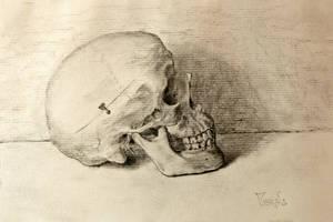 Still life skull by MesolimbicArt