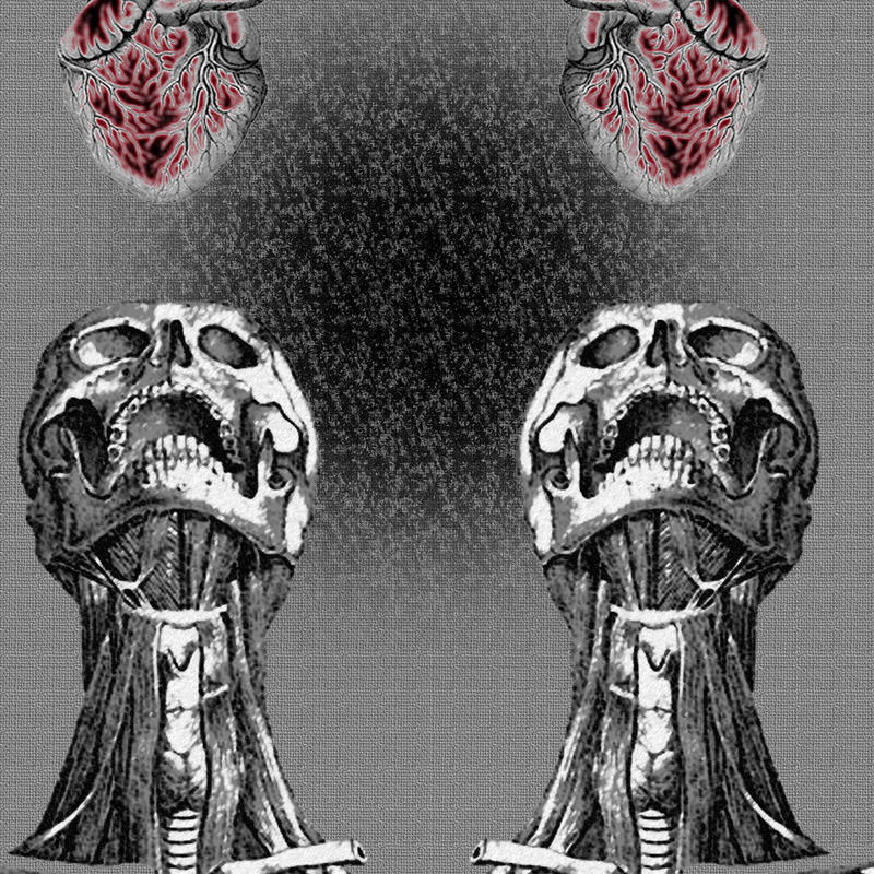 Abstract Anatomy Symmetry By Blinding Strobe On Deviantart
