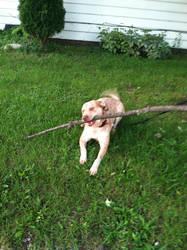Biggest stick in the yard.