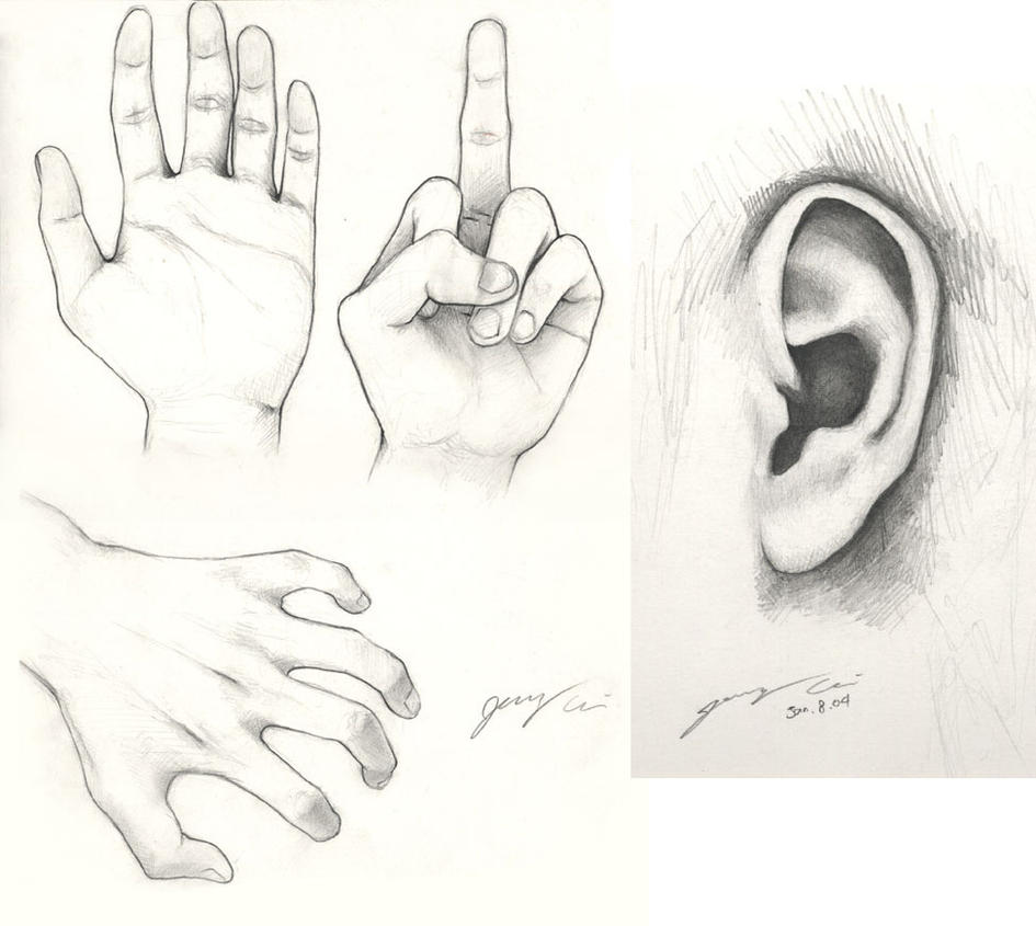 Pencil Sketching - Hands n Ear by JerryCai on DeviantArt Ear Sketches