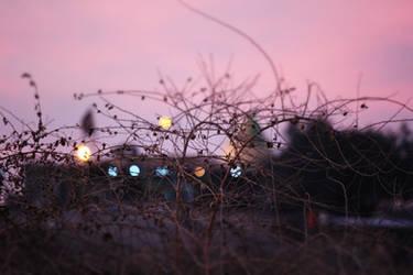 Holly Lights