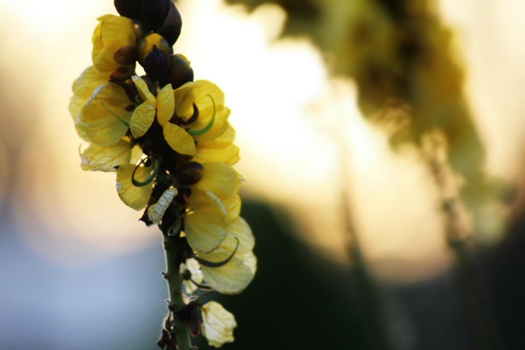A floral plant 2 by bluemix2